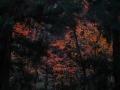 森奥の紅葉