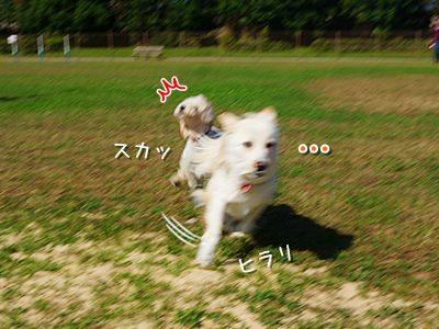 20151104_3.jpg