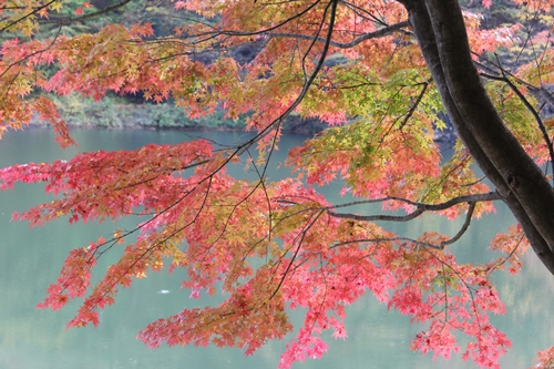 IMG_3942湖と紅葉