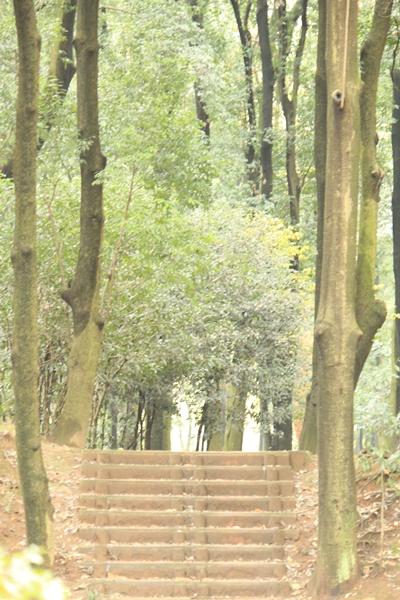 IMG_4959群馬の森1120