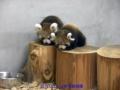 日本平動物園ー12