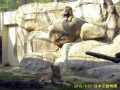 日本平動物園ー3