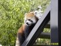 日本平動物園ー1