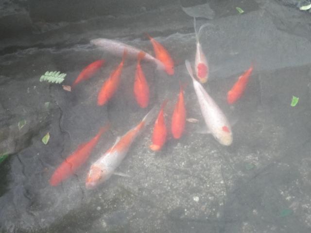 じいちゃんの池