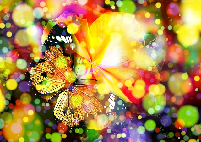 butterfly-407746_640 (1)