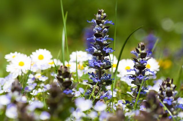 spring-meadow-752670_640.jpg