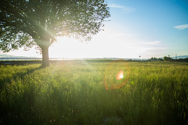 tree-925805_640.jpg