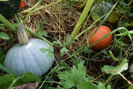 フランスも収穫の秋でした7