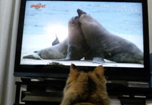 テレビおもしろい?