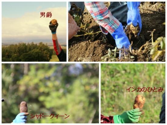 FotorCreated0920-2-1.jpg