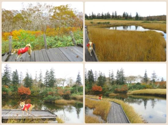 collage2015_10_11_2.jpg