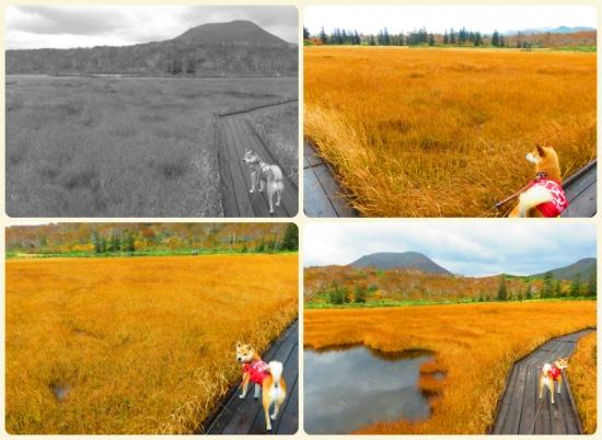 collage2015_10_11_4.jpg