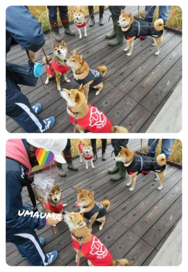 collage2015_10_11_5.jpg