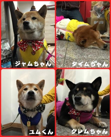 collage2015_11_21_1.jpg