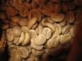 151011コロンビアサンアウグスティン生豆