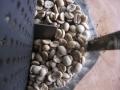 151123タンザニア・キボー・AA生豆
