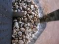 11月最後のマンデリン生豆
