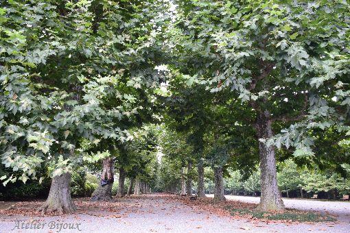 057-プラタナス並木
