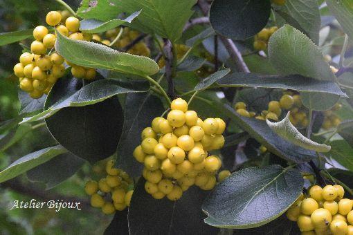 076-新宿御苑-植物