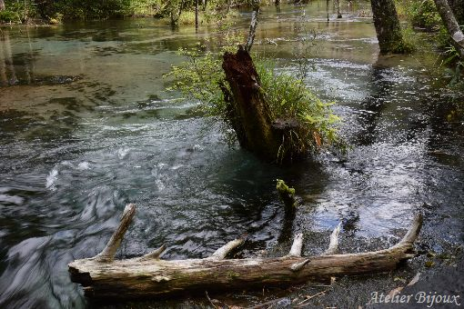 159-岳沢湿原