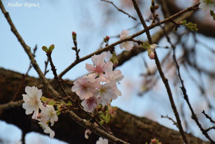 006-十月桜
