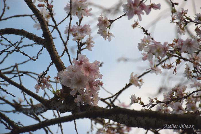 009-十月桜
