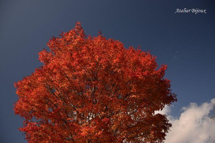 062-紅葉