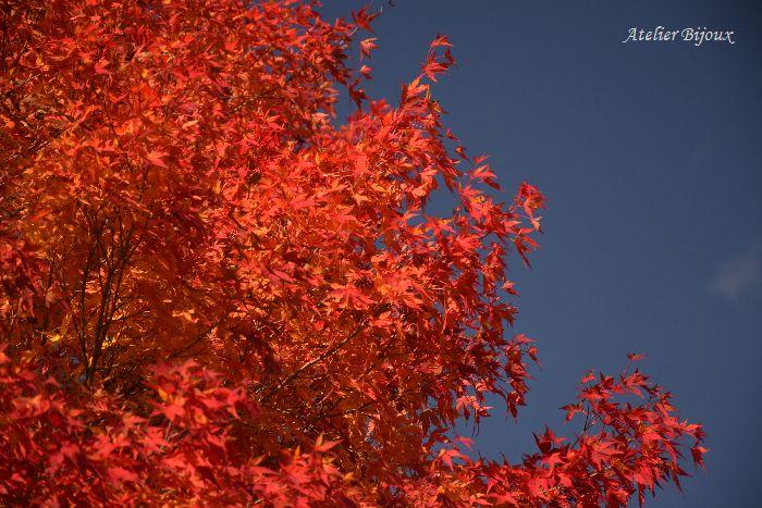 063-紅葉