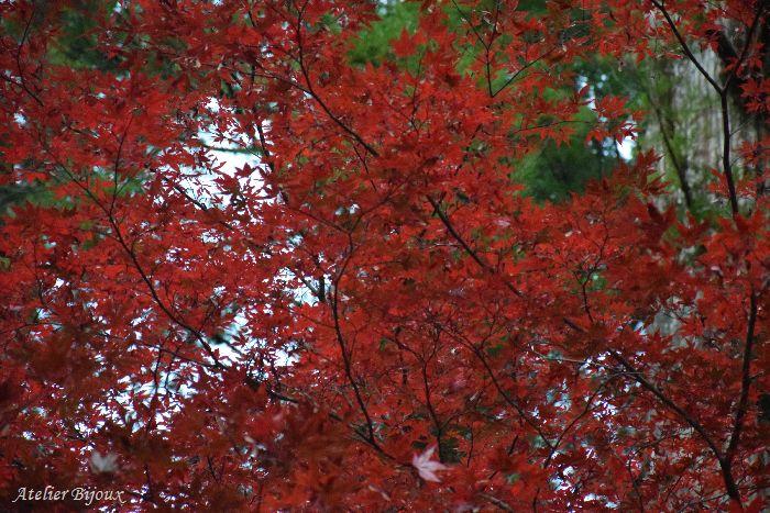 072-紅葉