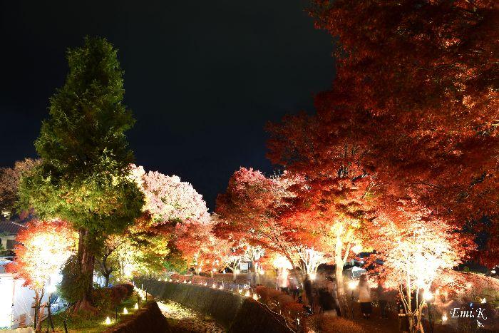 135-new-Emi-紅葉回廊夜景