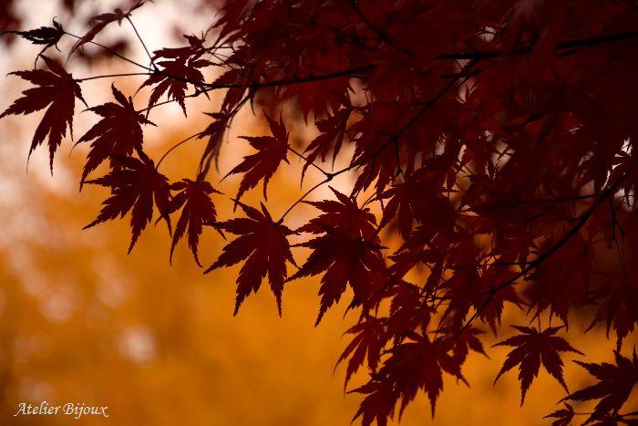 073-New-紅葉