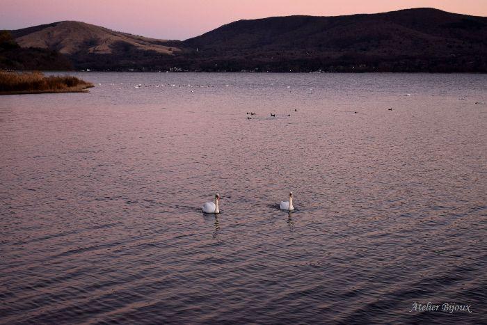 002-New-山中湖-白鳥