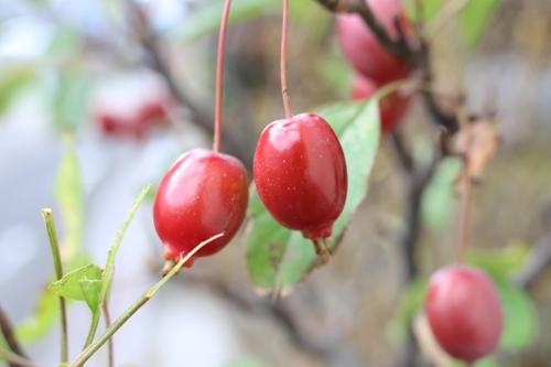 apples-20151116.jpg