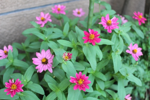 flower-20150901.jpg