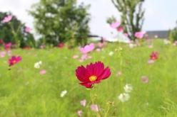 flower-20150904-01.jpg