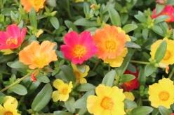 flower-20150904-03.jpg