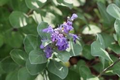 flower-20150904-04.jpg