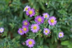 flower-20151019.jpg