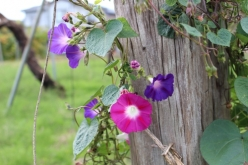 flower-20151026.jpg