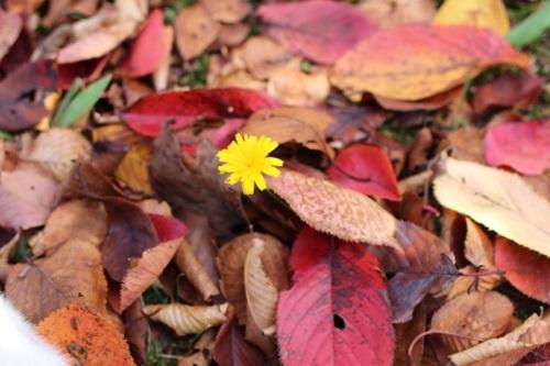 flower-20151027-00.jpg