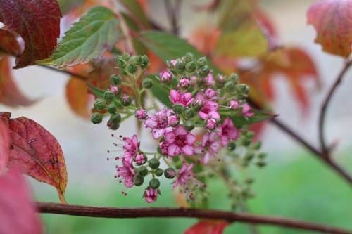 flower-20151109.jpg