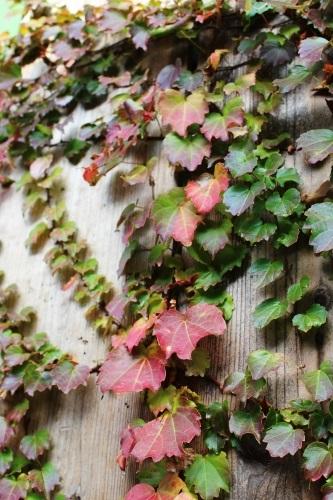 leaf-20151106-00.jpg