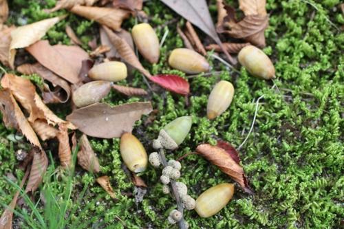 nuts-20150924.jpg