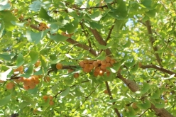 tree-20151017.jpg
