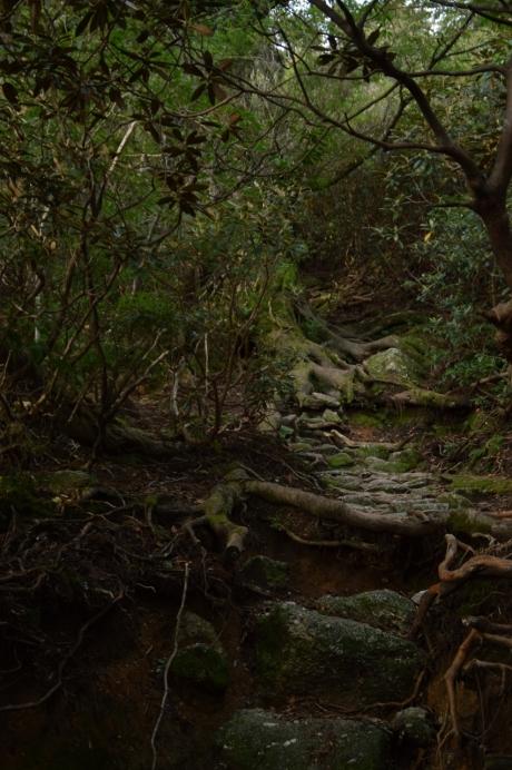 3森の中を進んでいく