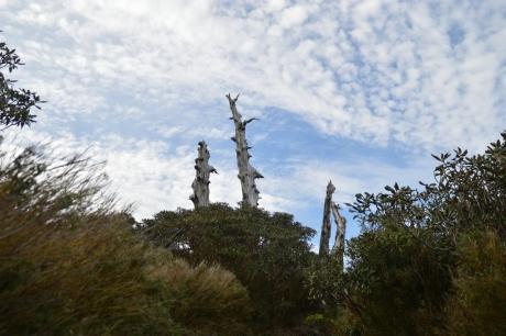 8枯れ木と空
