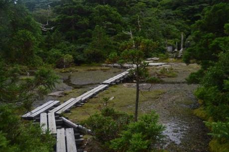 52小花之江河