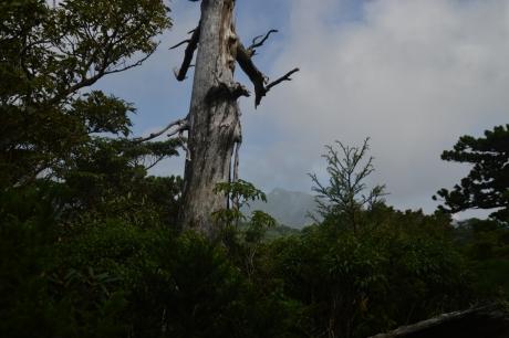 19枯木と黒味岳
