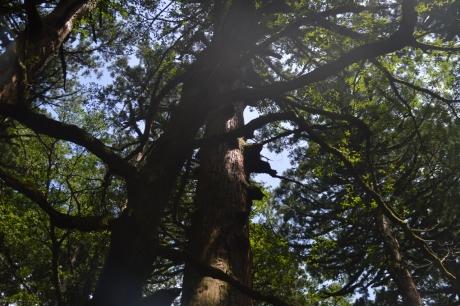 40守護の木
