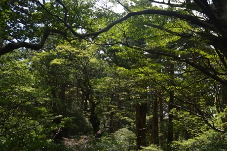 36感嘆の森